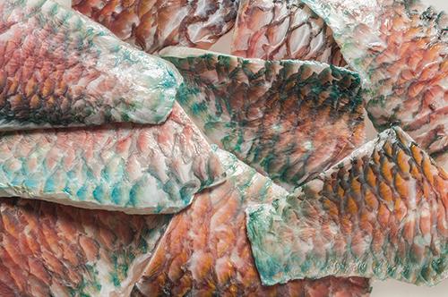 Tiefkühl-Fisch